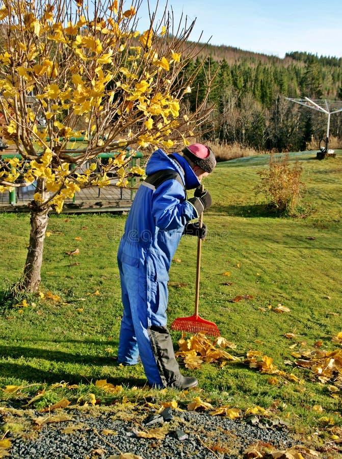 Человек сгребая лужайку стоковые фото