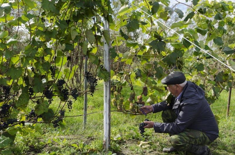 Человек сидеть вниз рядом с его виноградинами стоковая фотография rf