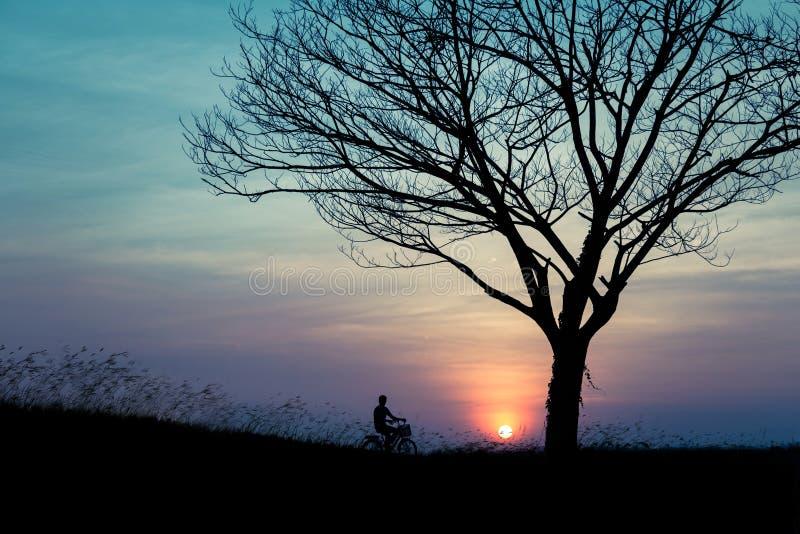 Человек с велосипедом в саде стоковые фото