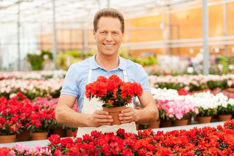 Download Человек с в горшке заводом стоковое изображение. изображение насчитывающей аграрным - 40586279