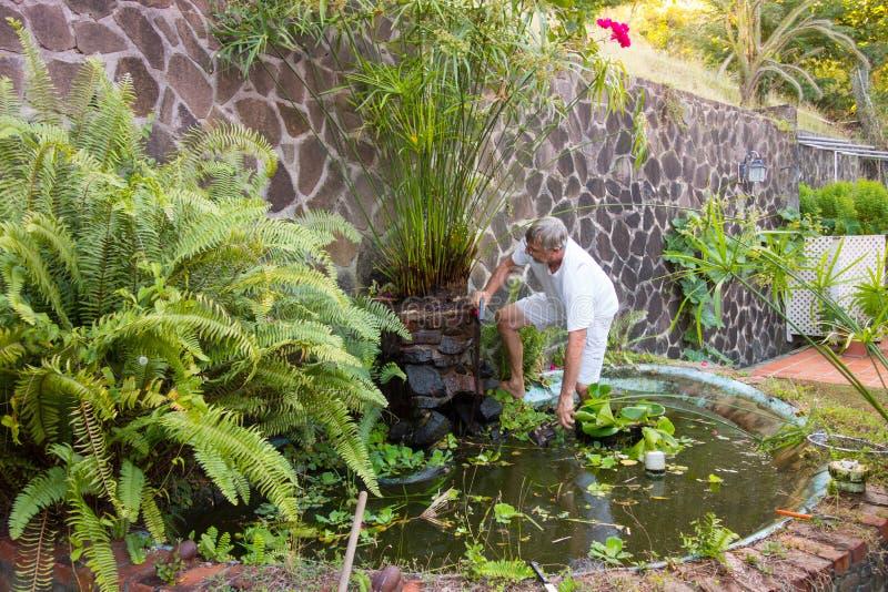 Человек уравновешивая завод папируса в тропиках стоковые изображения