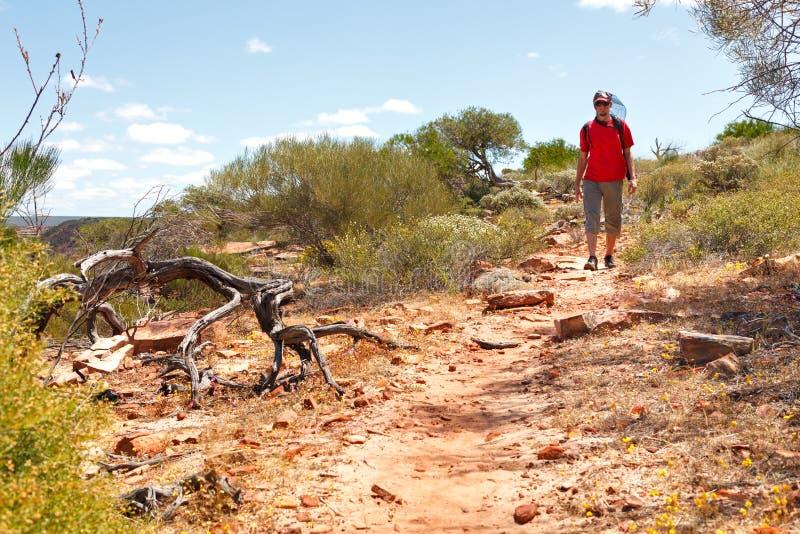 Человек hiking австралийское захолустье стоковые фото