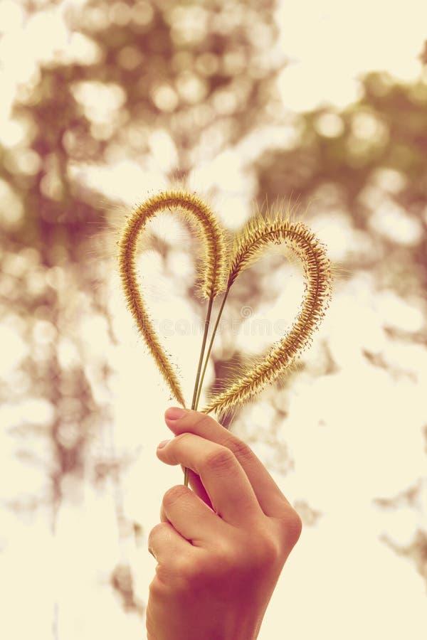 Человеческая рука держа цветок травы сердц-формы человек влюбленности поцелуя принципиальной схемы к женщине стоковые фотографии rf