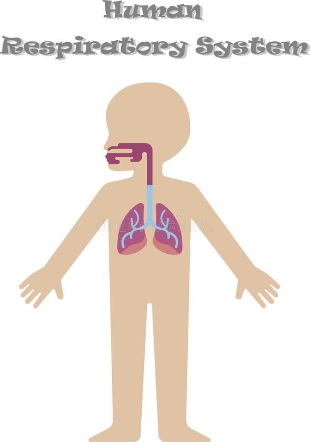Человеческая дыхательная система для детей иллюстрация вектора