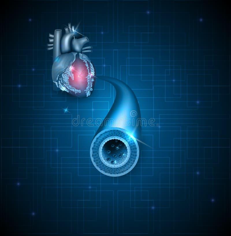 Человеческие артерия и сердце иллюстрация вектора