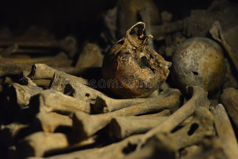 Человеческие косточки стоковые изображения rf
