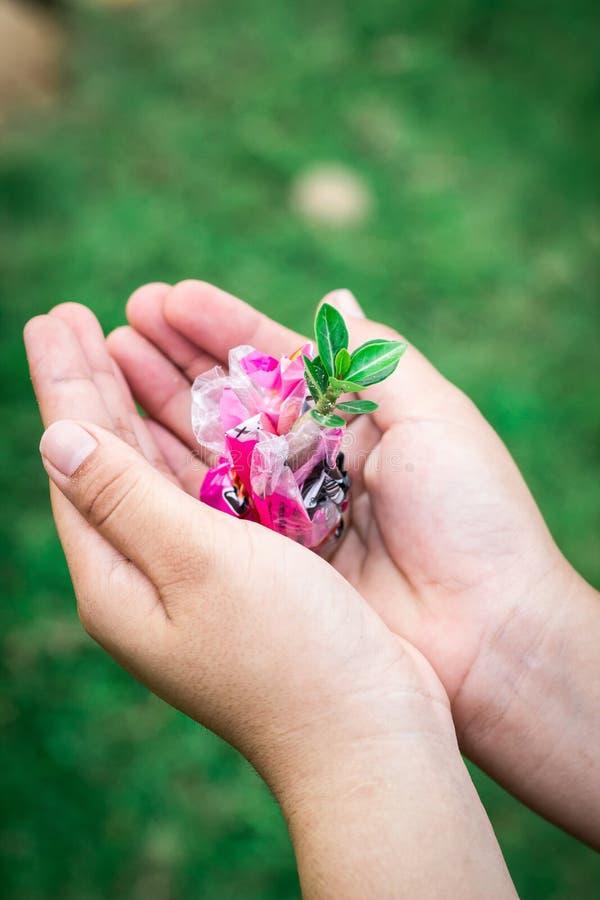 Человеческие руки держа зеленое растение над предпосылкой природы стоковое фото