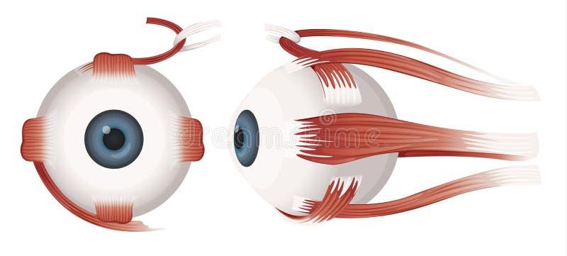 Человеческий глаз иллюстрация штока