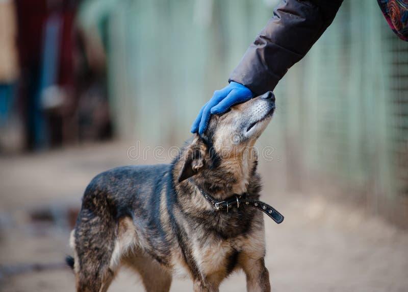 Человеческий и шавка в укрытии собаки стоковое фото