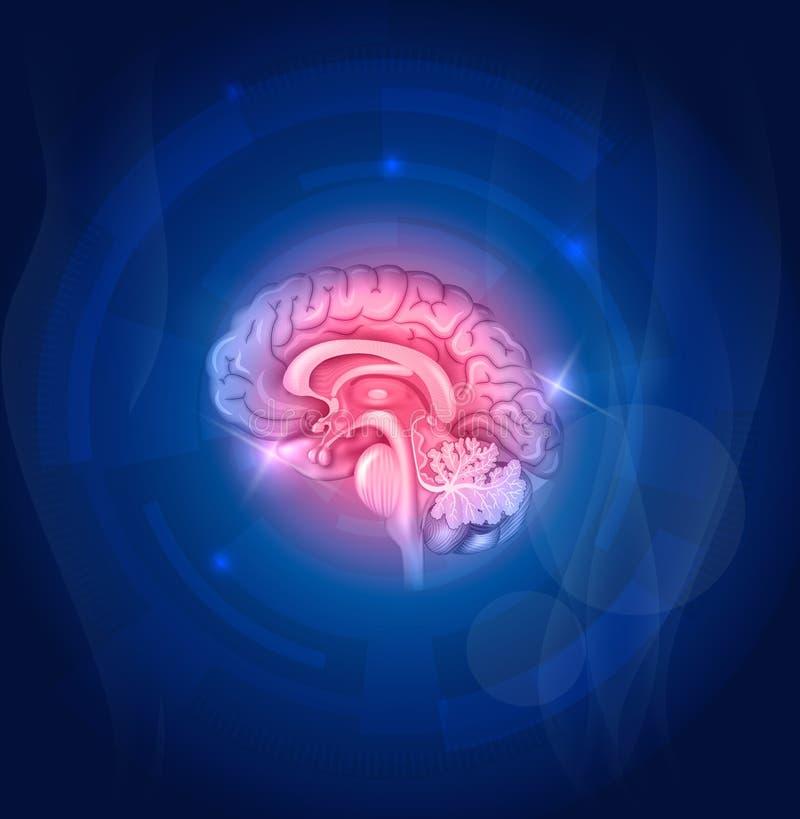 Человеческий мозг на голубой предпосылке иллюстрация вектора