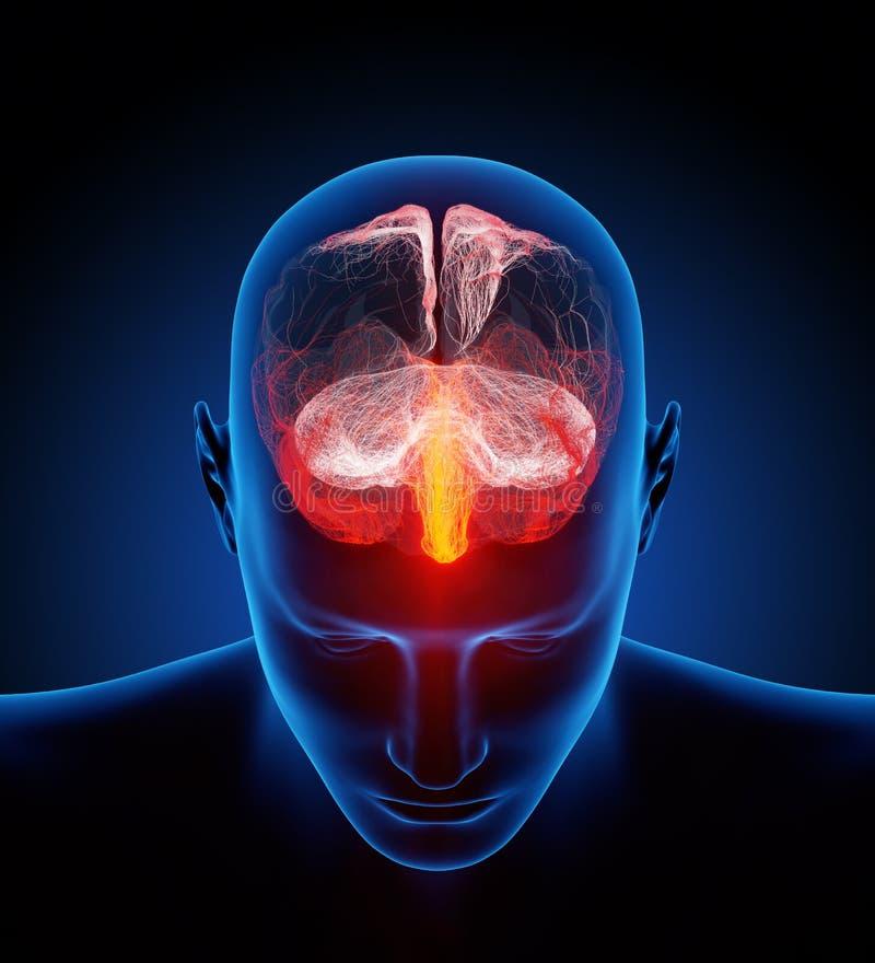 Человеческий мозг проиллюстрированный с миллионами малых нервов иллюстрация штока