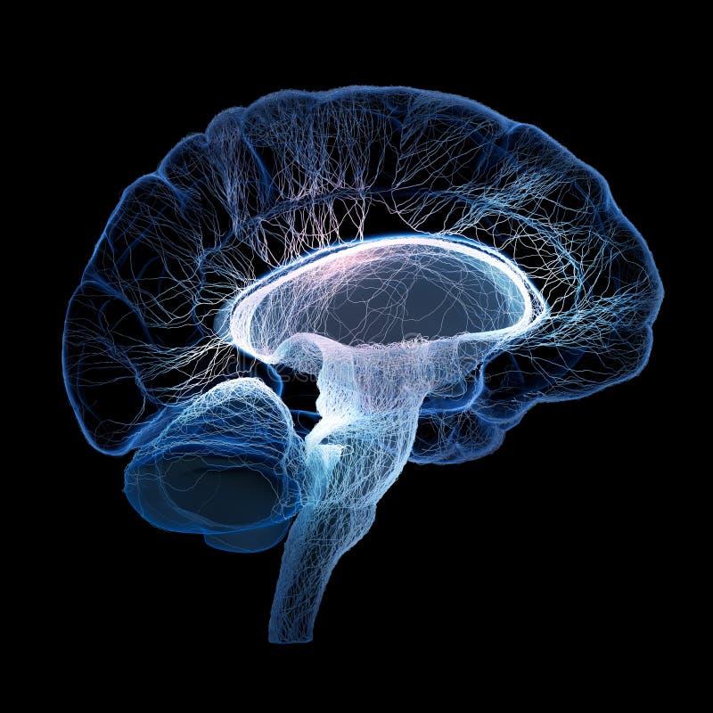 Человеческий мозг проиллюстрированный с соединенными малыми нервами иллюстрация штока