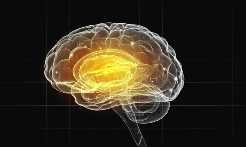 Человеческий мозг иллюстрация штока