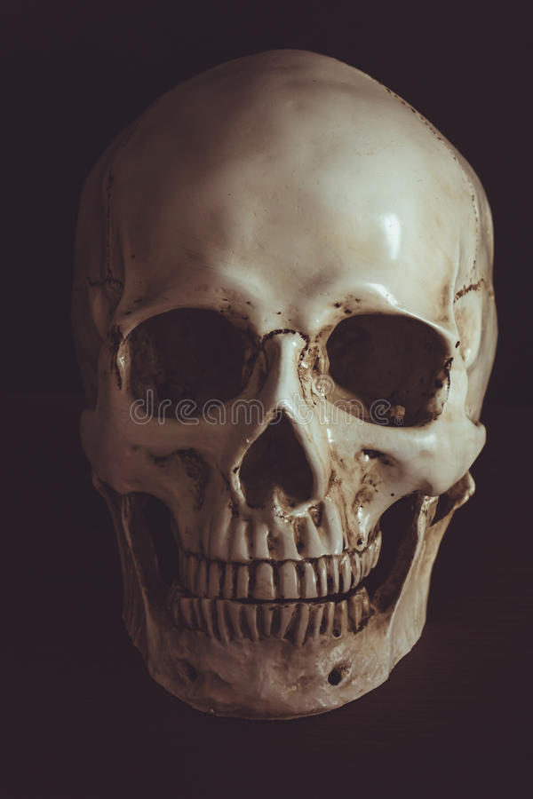 Человеческий череп в темноте стоковые изображения