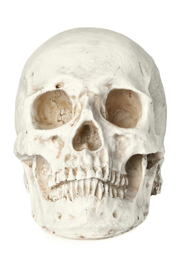 Человеческий череп изолированный на белизне стоковое фото rf