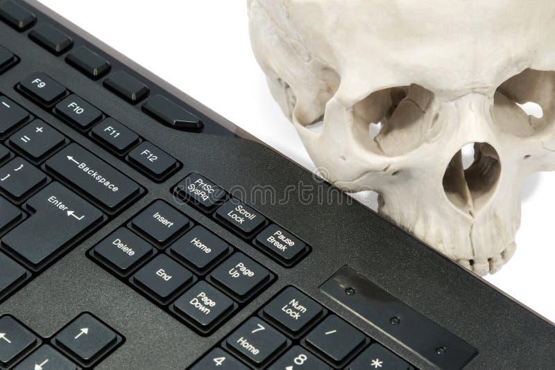Человеческий череп около клавиатуры стоковая фотография rf