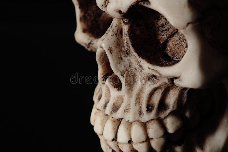 Человеческий череп стоковые фото