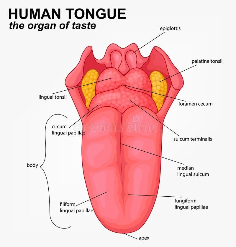 Человеческий шарж структуры языка бесплатная иллюстрация
