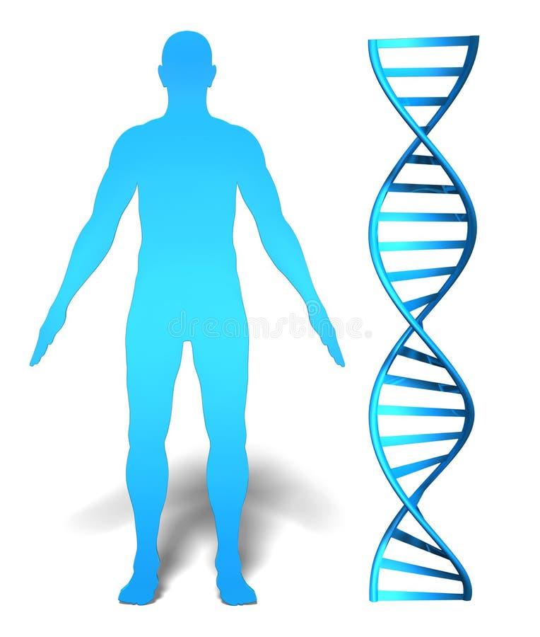 Человеческое исследование гена и генетическая концепция информации с дна закручивают в спираль иллюстрация вектора