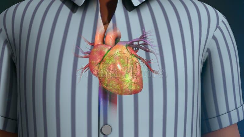 Человеческое сердце иллюстрация штока