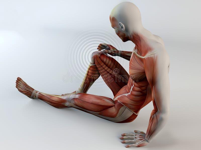 Человеческое тело, боль колена, мышцы, разрыв мышцы иллюстрация вектора