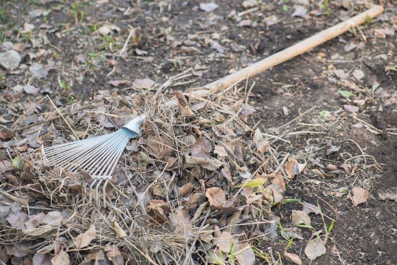 Чистка высушила листья с граблями стоковое изображение rf
