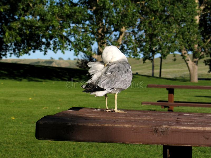Чистка сама птицы