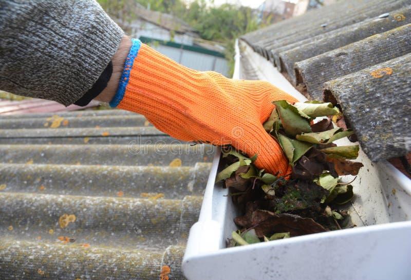 Чистка Roofer со сточной канавой крыши руки от упаденных листьев и грязи в падении стоковые фотографии rf