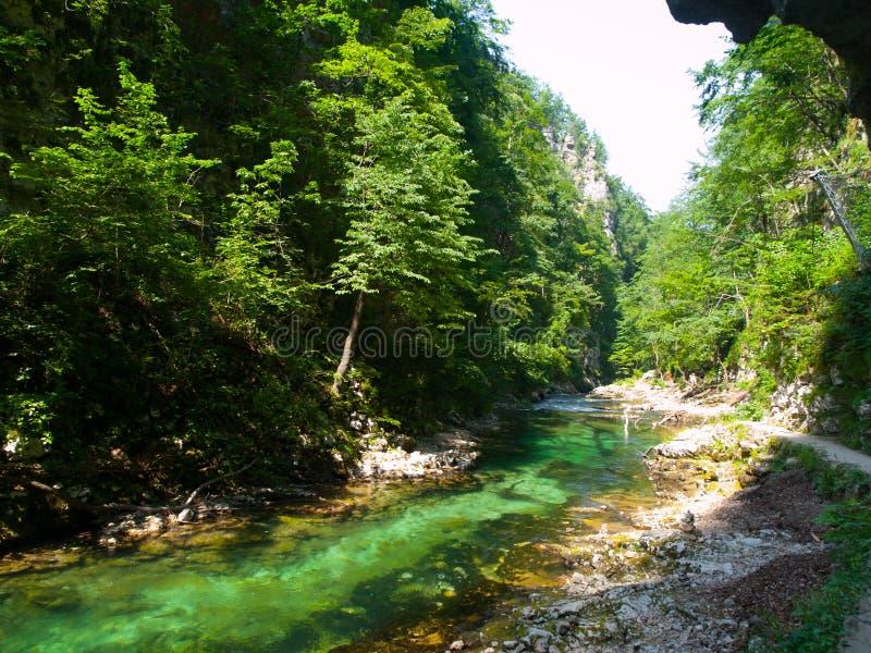 Чисто открытое море реки Radovna в ущелье Vintgar Естественные водопады, бассейны и речные пороги и туристский путь Словения стоковая фотография