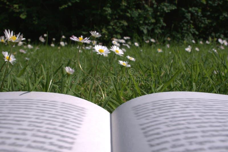 Читать в траве стоковые изображения rf