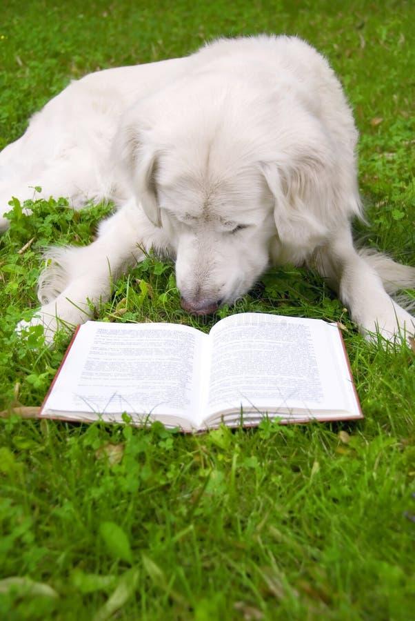 чтение собаки книги стоковая фотография rf