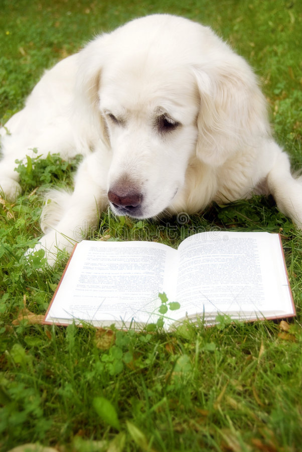 чтение собаки книги стоковое фото rf