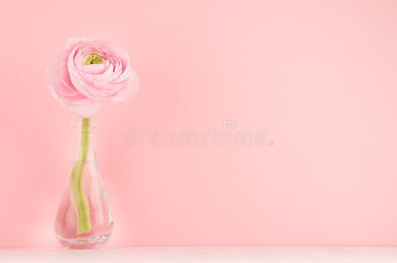 Чувствительное домашнее оформление с розовым цветком лютика на белой деревянной таблице, праздничной предпосылке для дизайна для  стоковые изображения