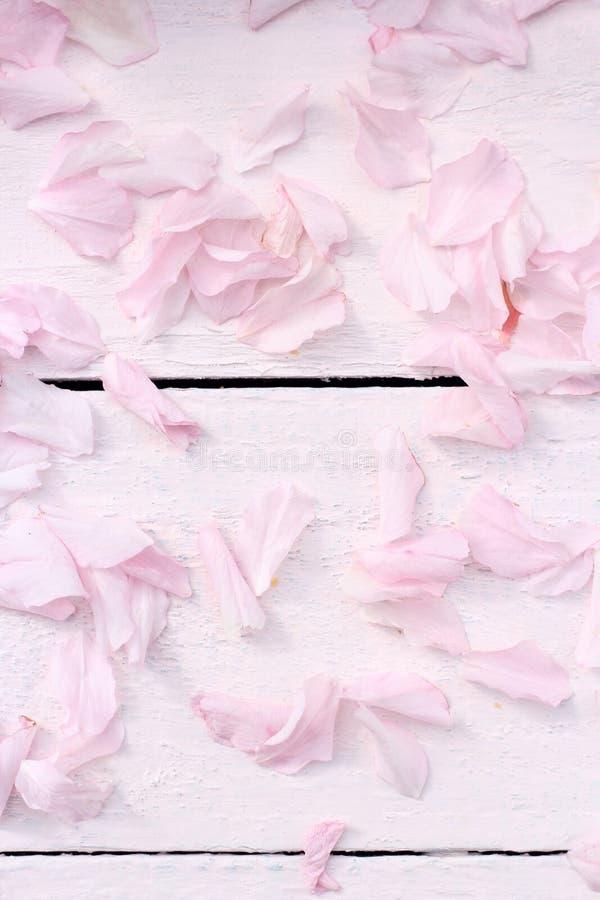 Чувствительная janapese вишня цветет лепестки на свете - розовой деревянной предпосылке стоковые фотографии rf