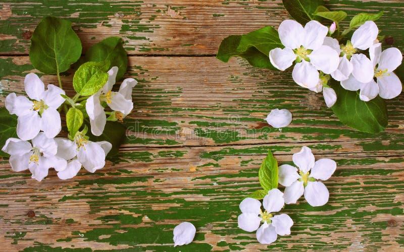 Чувствительные цветки и лепестки яблони стоковые фото