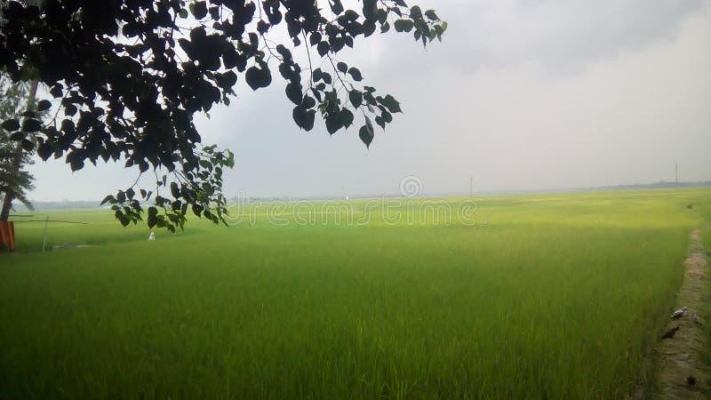 Чувство деревни стоковое изображение rf