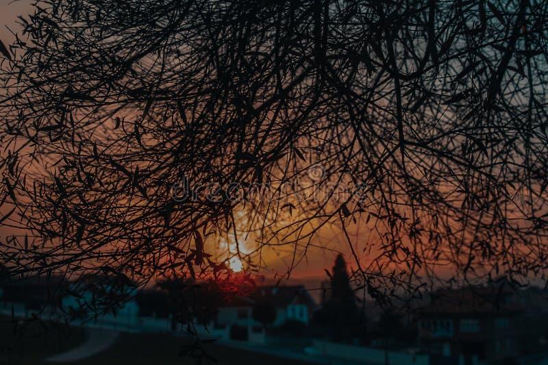 Чувствуйте заход солнца стоковые фотографии rf