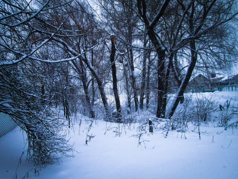чудесная снежная украинская зима стоковые фотографии rf