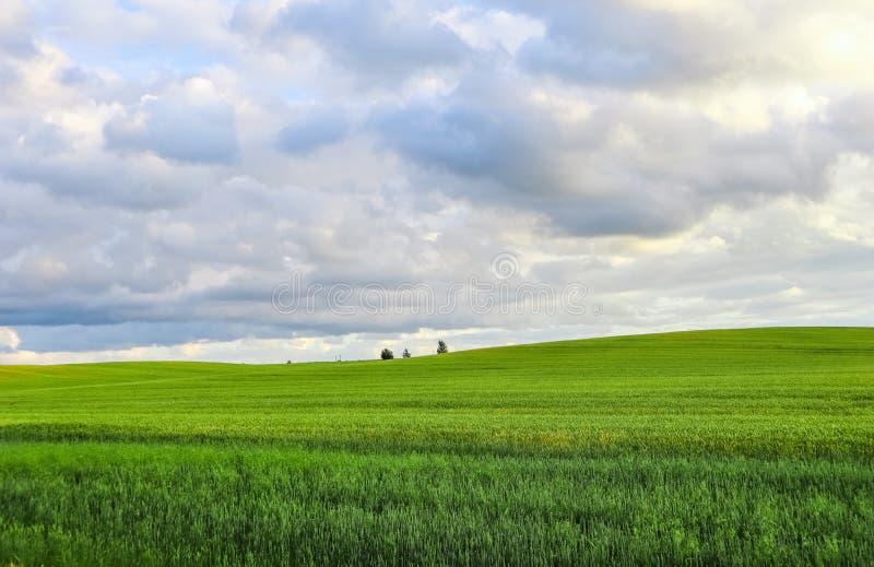 Чудесное зеленое поле, холмы, деревья и голубое небо с облаками в сельской местности r стоковое изображение