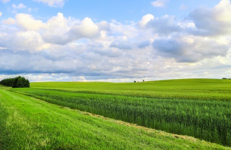 Чудесное зеленое поле, холмы, деревья и голубое небо с облаками в сельской местности r стоковые фотографии rf