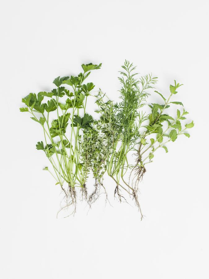 Чудесные зеленые травы на белой предпосылке стоковое фото rf