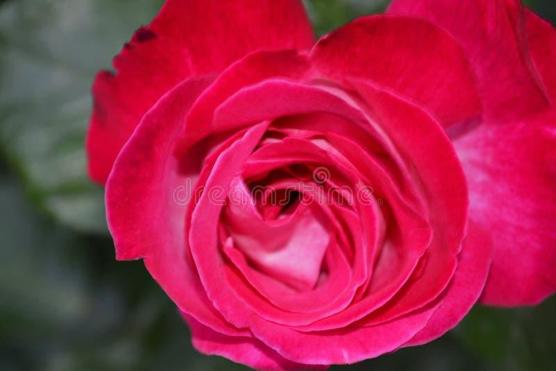 Чудесные цветки 1 сада стоковые фото