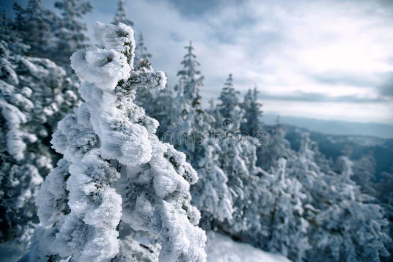 Чудесный зимний ландшафт Деревья леса горы зимы морозные стоковое изображение rf