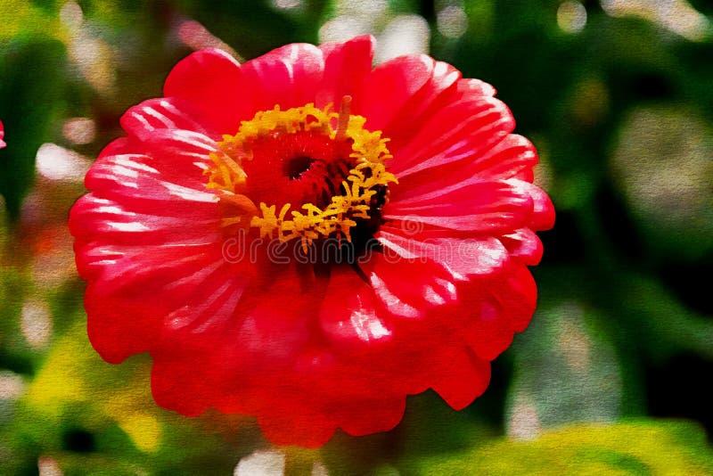 Чудесный красный цветок осени, картина маслом стоковая фотография rf