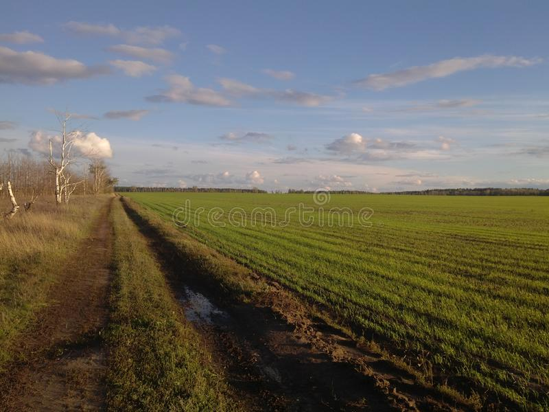 чудесный ландшафт зеленого поля стоковые изображения rf