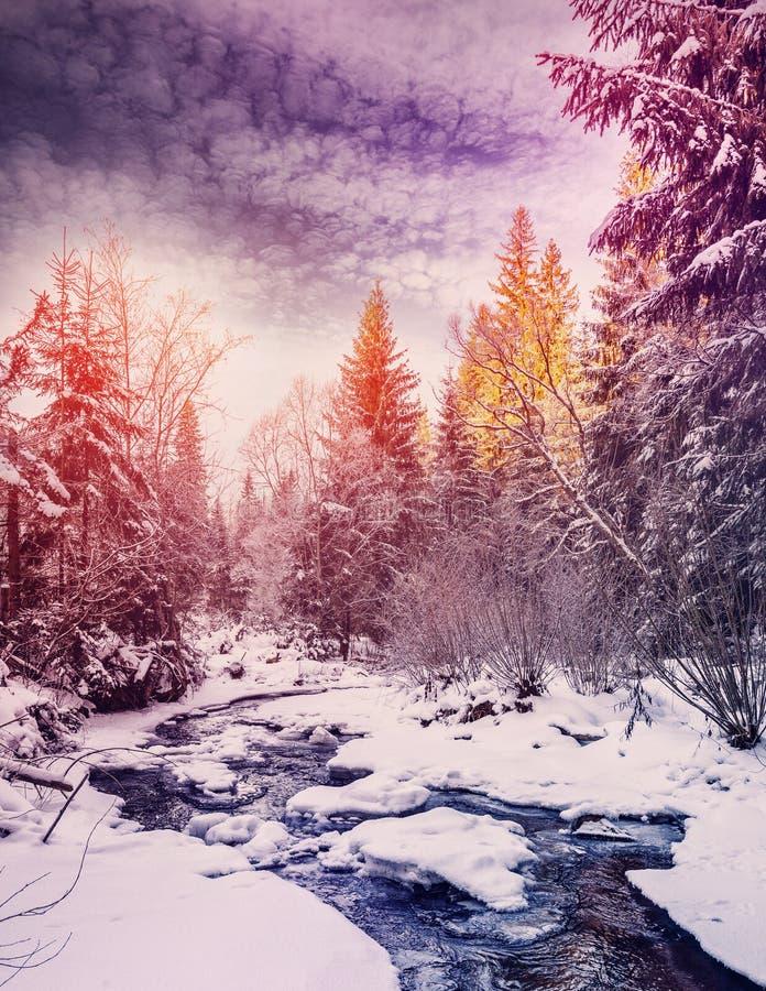 Чудесный ландшафт зимы снег покрыл сосну над рекой горы под солнечным светом стоковые фотографии rf