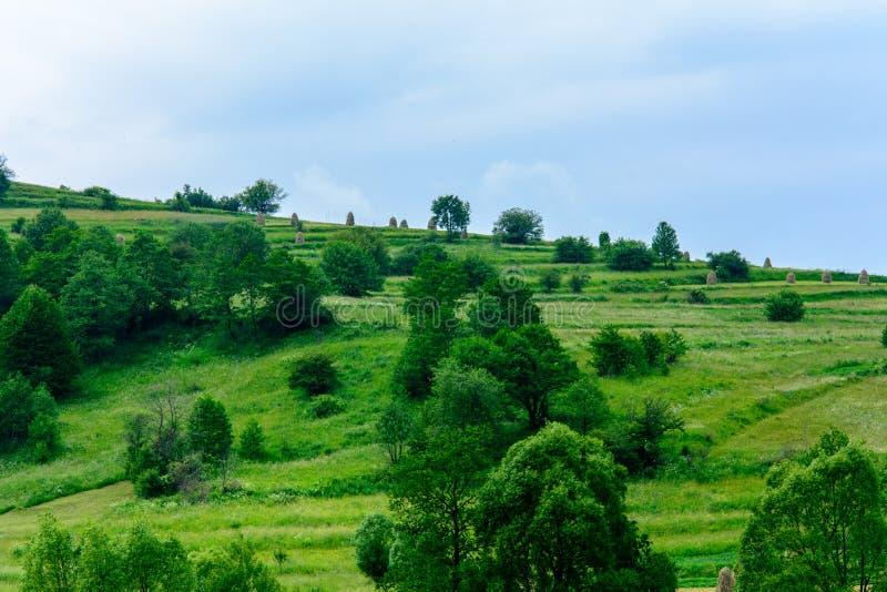 Чудесный ландшафт украинской деревни в прикарпатских горах стоковое фото rf
