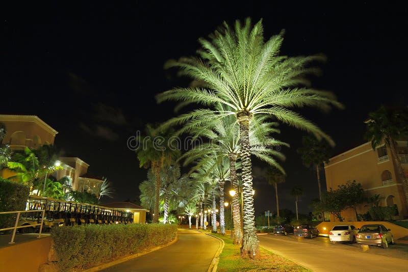 Чудесный парк ночи с зелеными пальмами, припаркованными автомобилями и зданиями стоковая фотография rf