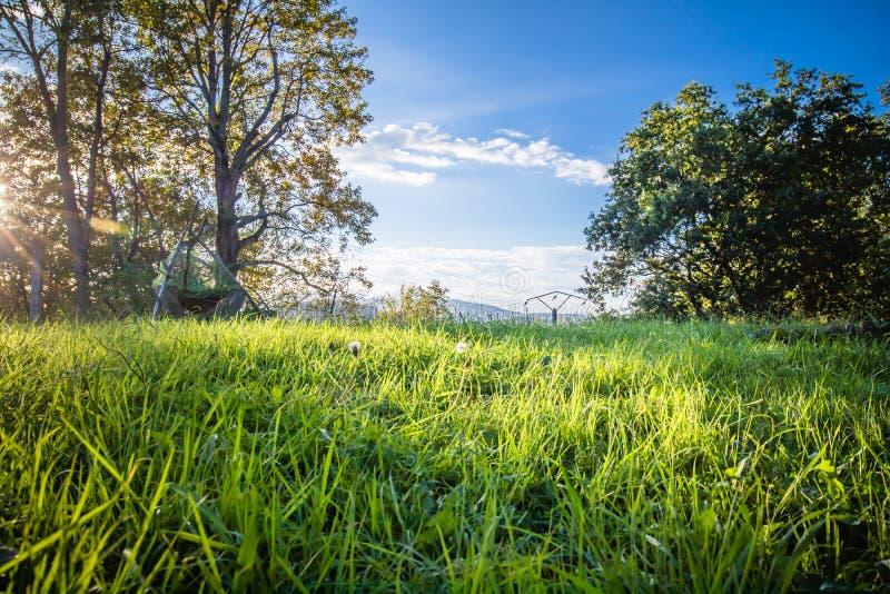чудесный сценарный зеленый ландшафт с лугом и деревьями в голубом небе, изменении сезонов, последних тенях лета в теплом ноябре стоковые изображения rf