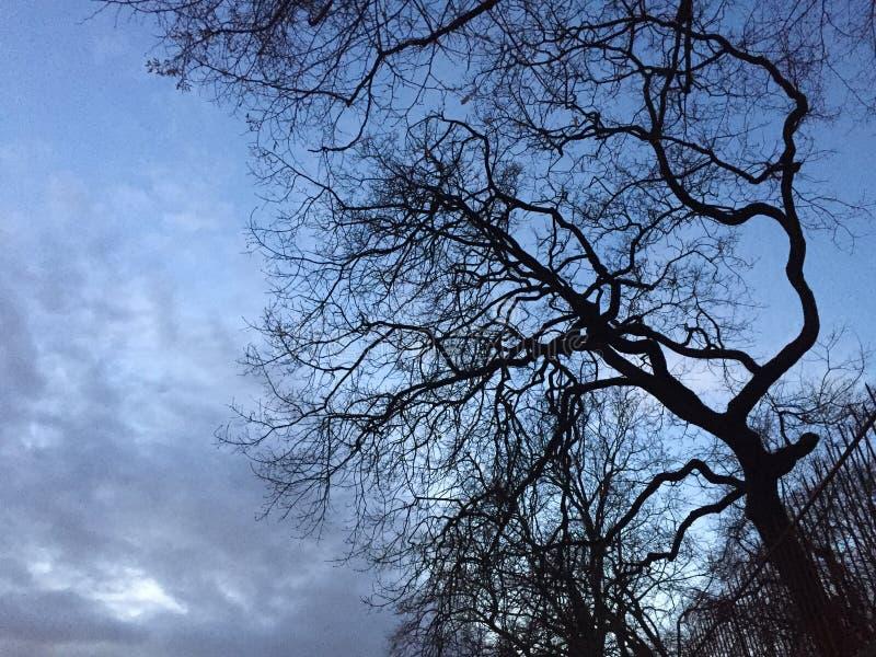 Чуть-чуть дерево на ноче стоковые изображения rf
